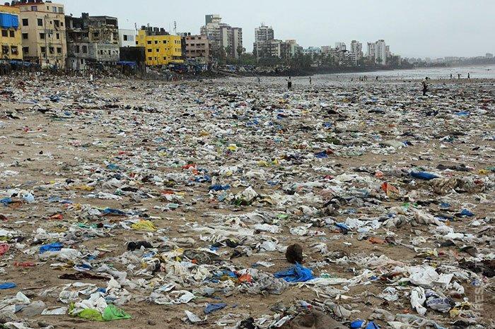 Черепахи вернулись на индийский пляж!