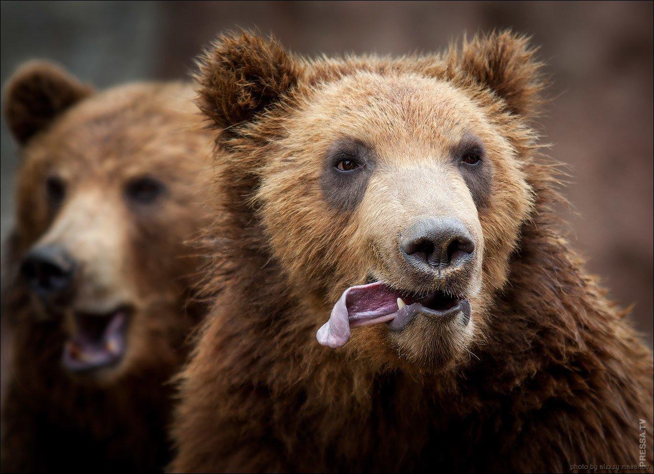 Выходных гифки, медведь приколы картинки