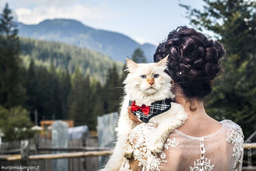 картинки с кошками о свадьбе также
