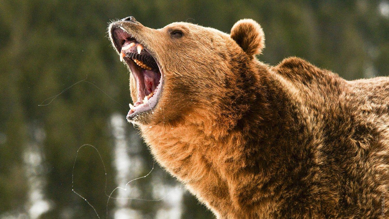 принижает права фото медведя который злится тех пор