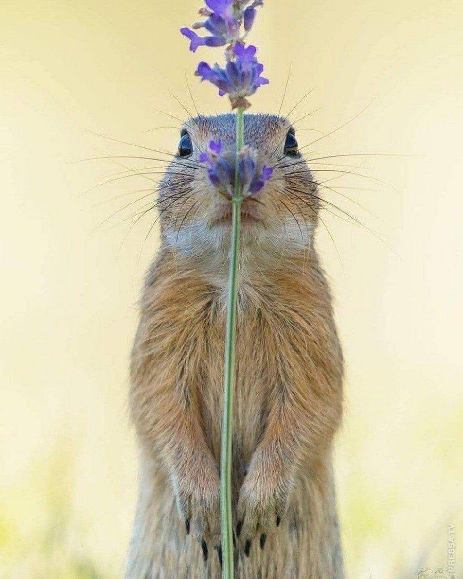 Юбилеем, прикольные картинки растения