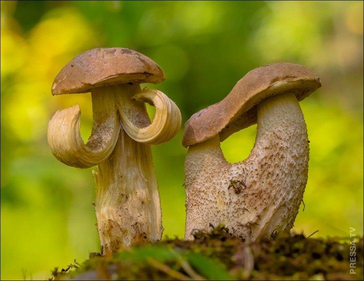 Картинки грибов смешных, про больницу картинка