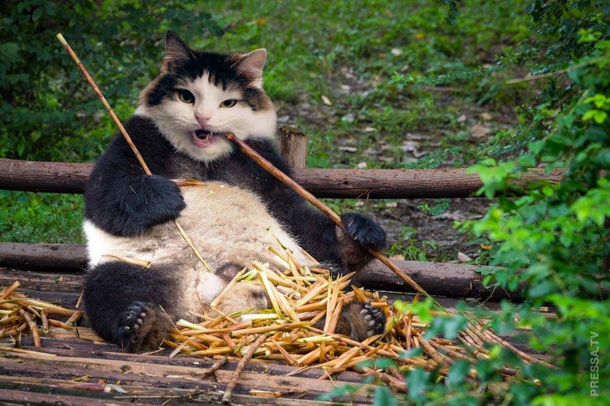 Детьми, кот прикольные картинки фотошоп