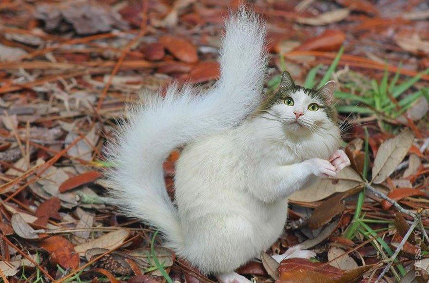 Днем рождения, кот прикольные картинки фотошоп