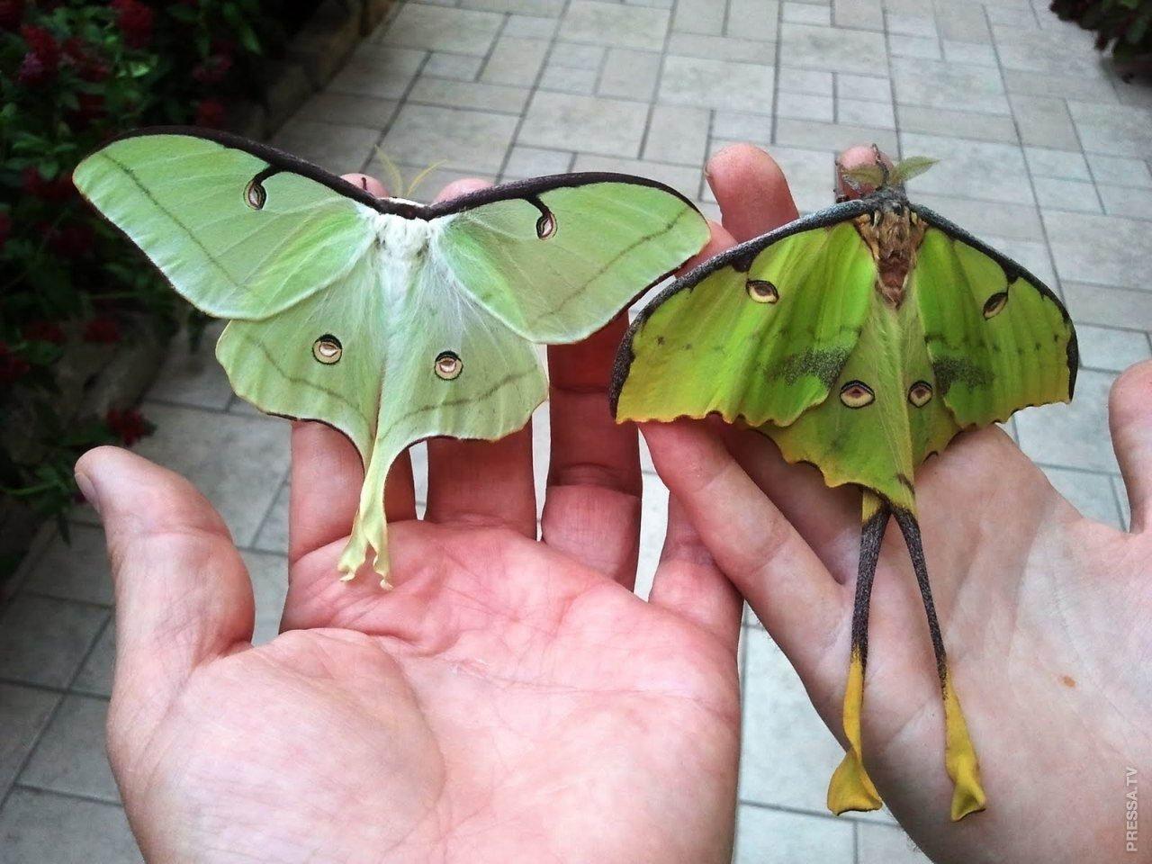 Месяц, картинки бабочек смешные