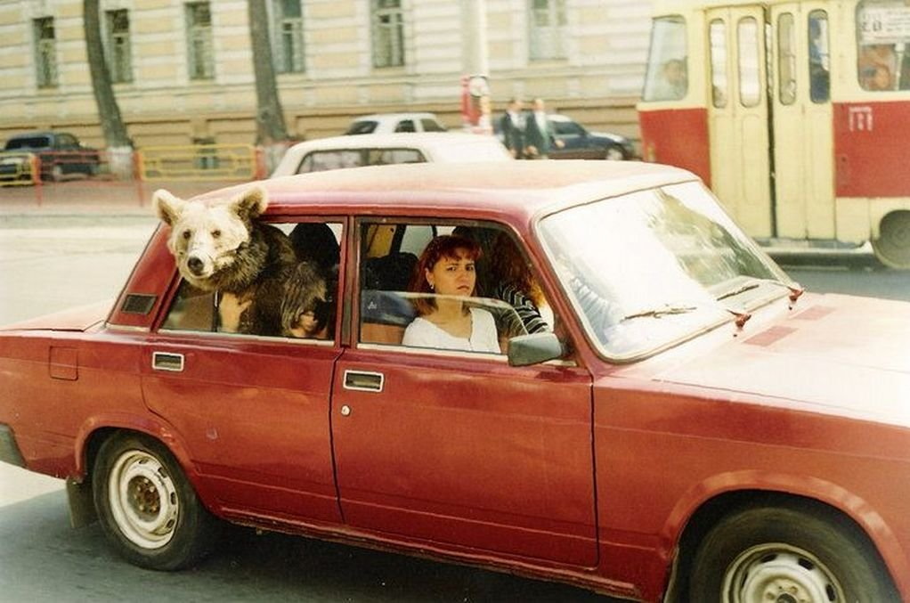 Прикольные картинки с медведем в машине, яркие сказками