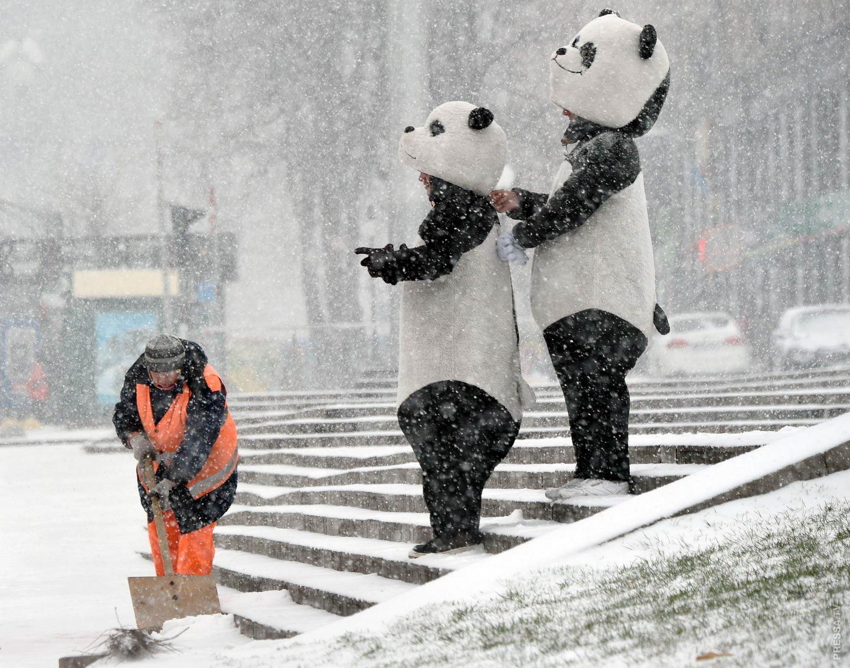 потому, зима дождь картинки приколы актульная информация про