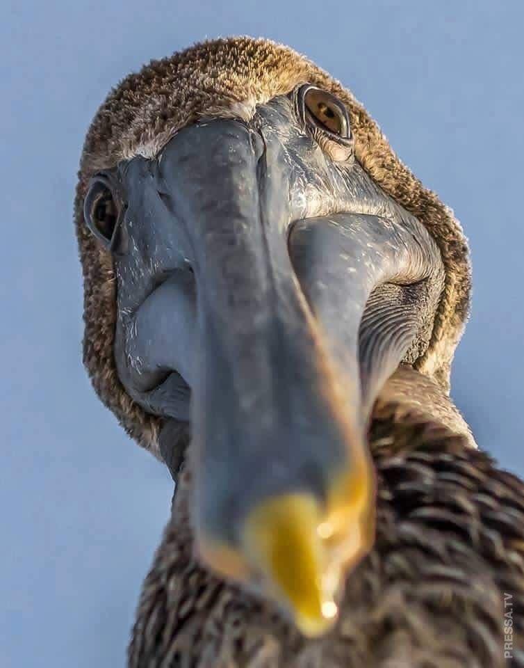 самые прикольные фото птиц знаете, как