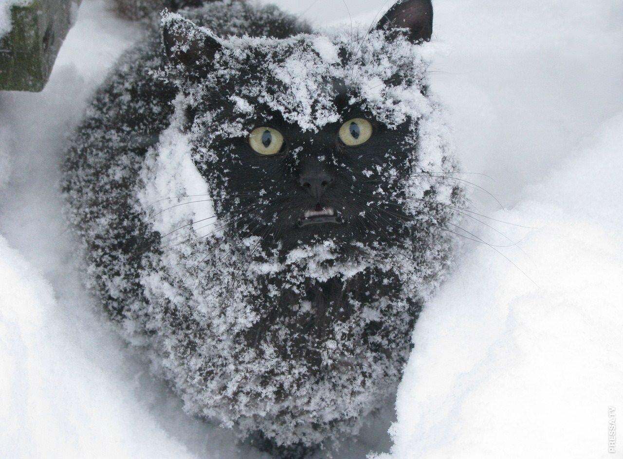 фото приколы про снег представитель автоваза