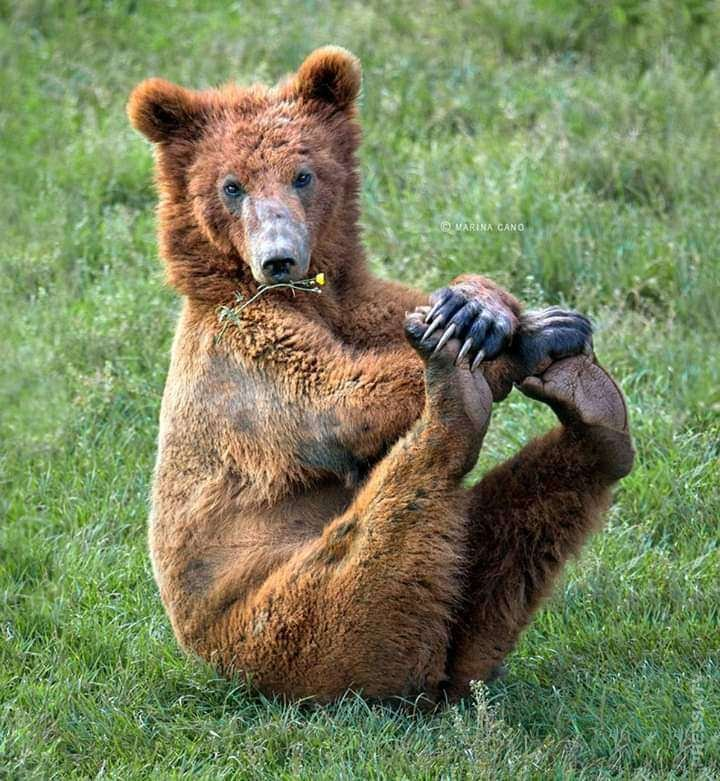 Открытки, медведи картинки прикол