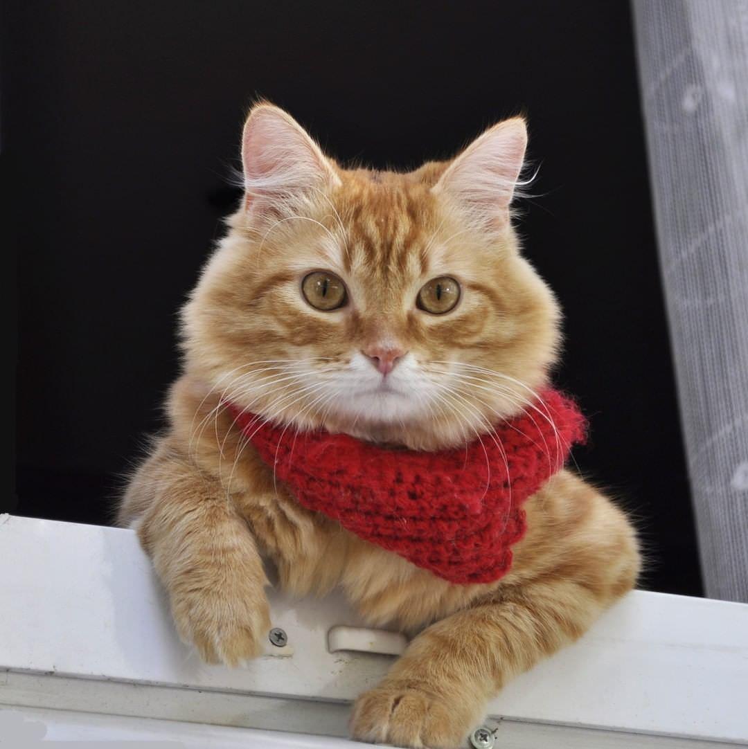 Прикольные картинки о шарфиках