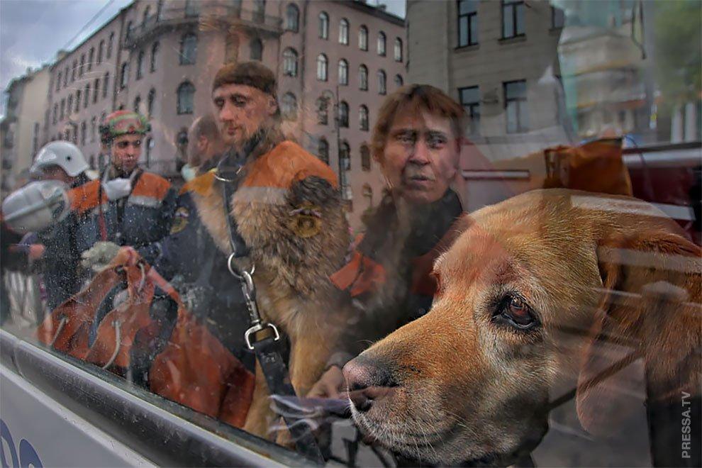 можете сбросить уличные снимки фотографа александра петросяна титуле