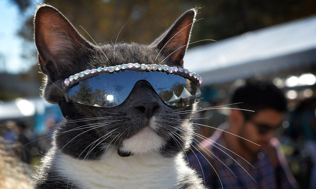 Предложения, картинки на аву кошек прикольных