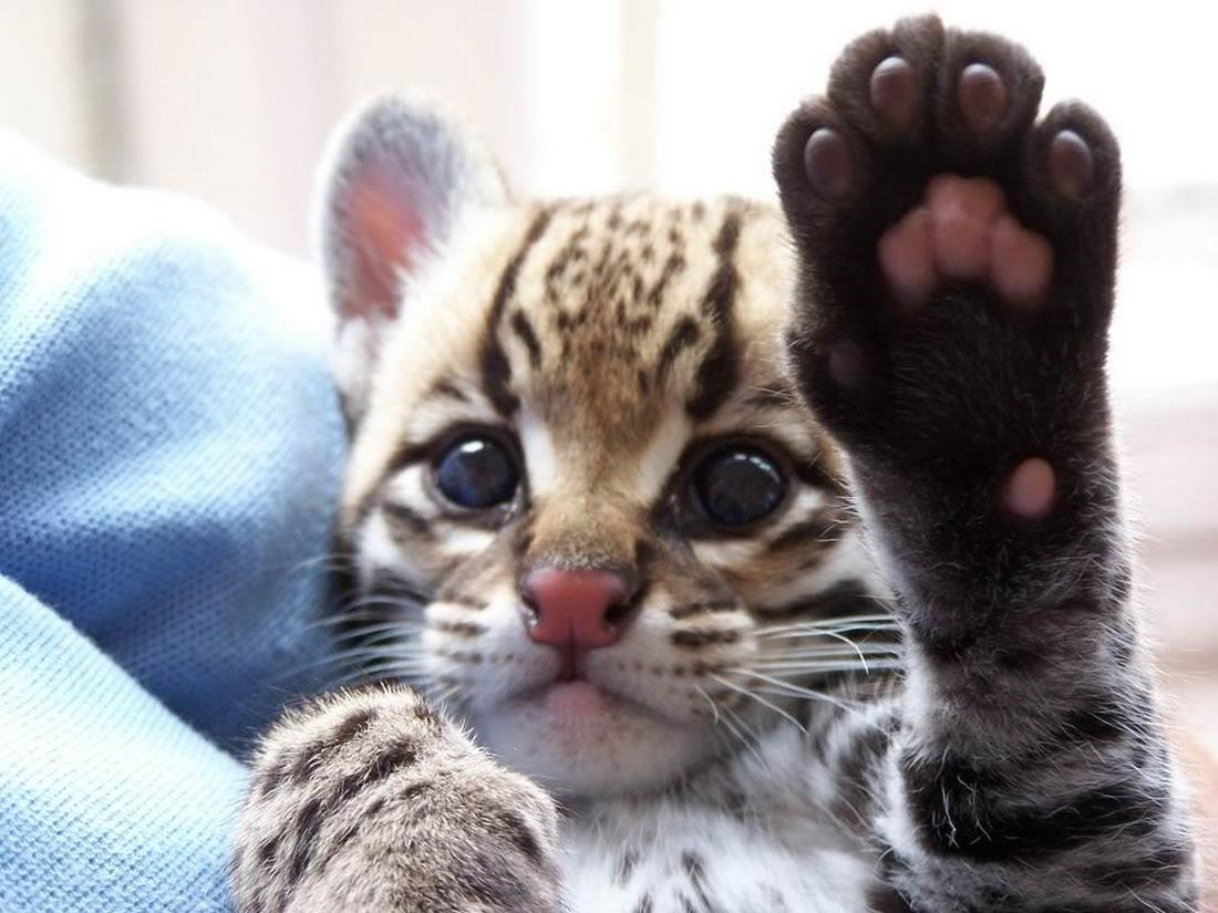 Поздравительная, картинки приветик котик прикольные