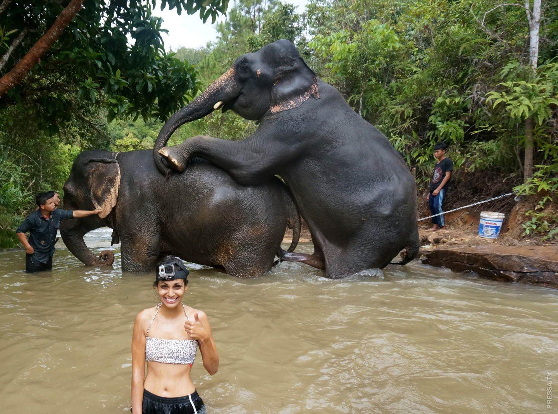 Прошедшим новым, прикол картинки тайланд