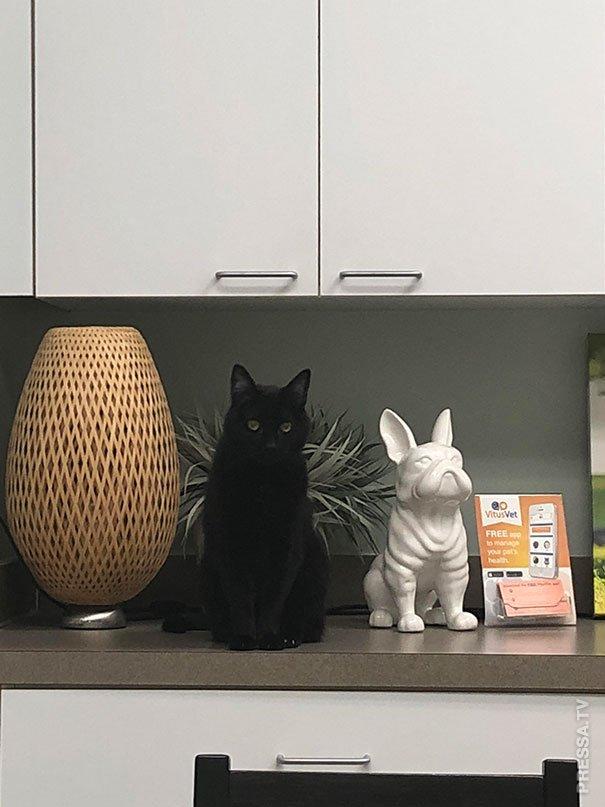 Куда прячутся кошки, спасаясь от ветеринара 16/02/2019