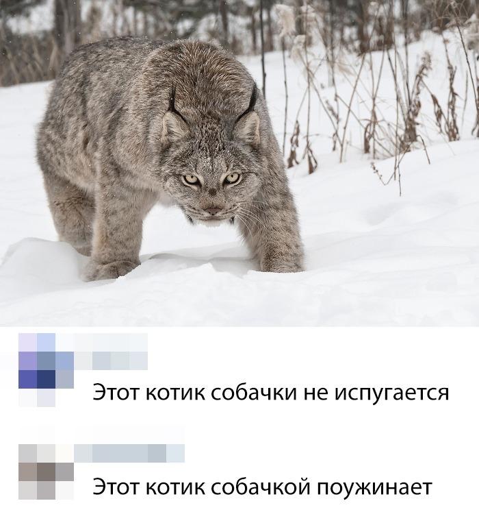1551789247_pressa_tv_sms-prikoly-05.jpg