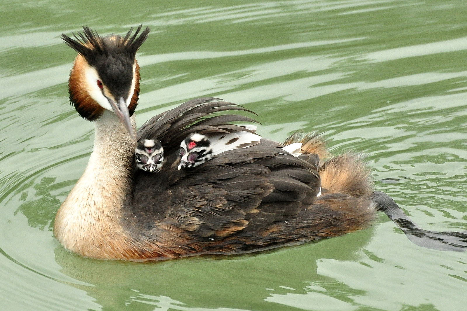 Самые прикольные фото птиц настолько
