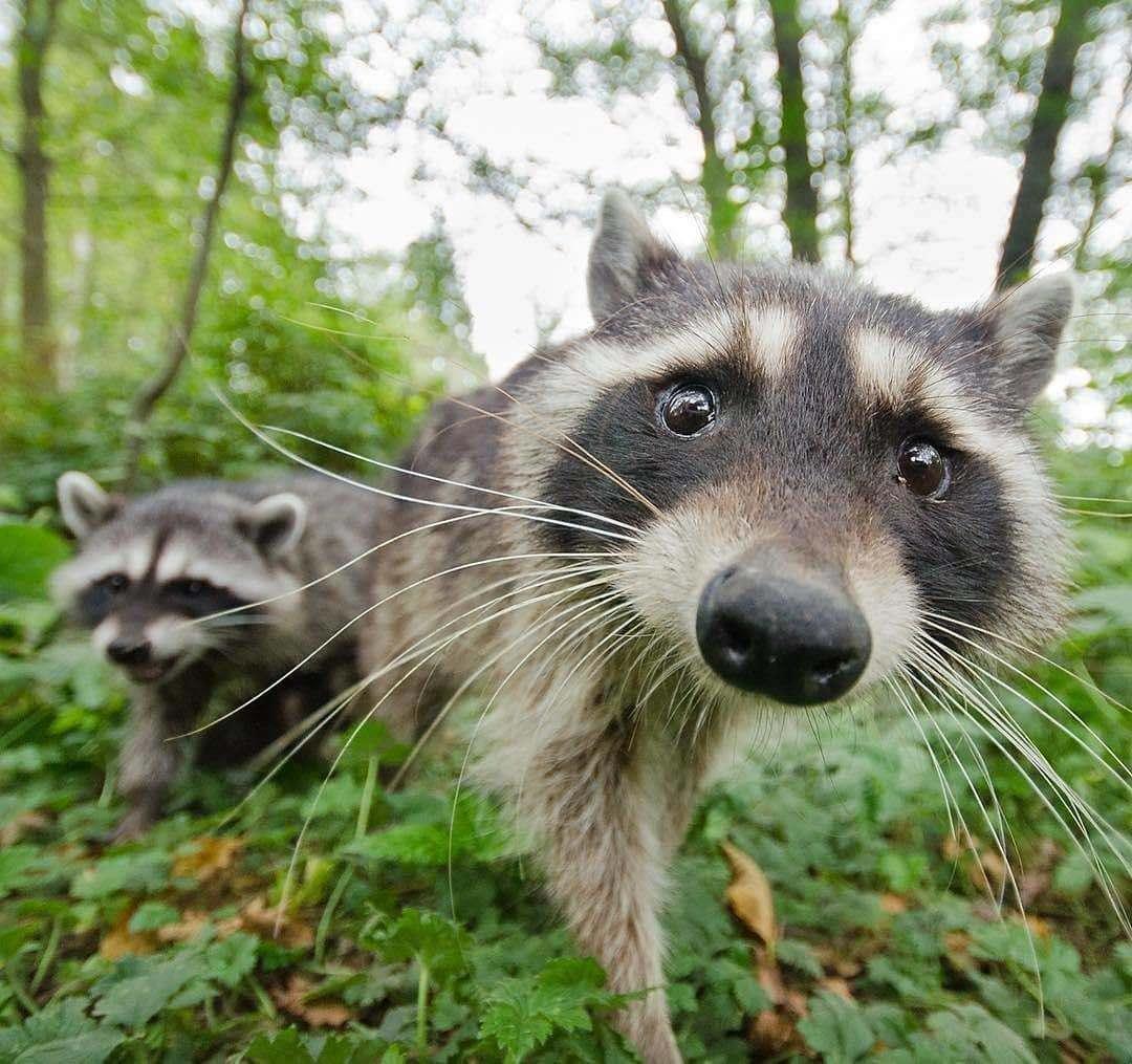 Картинка удивленные животные