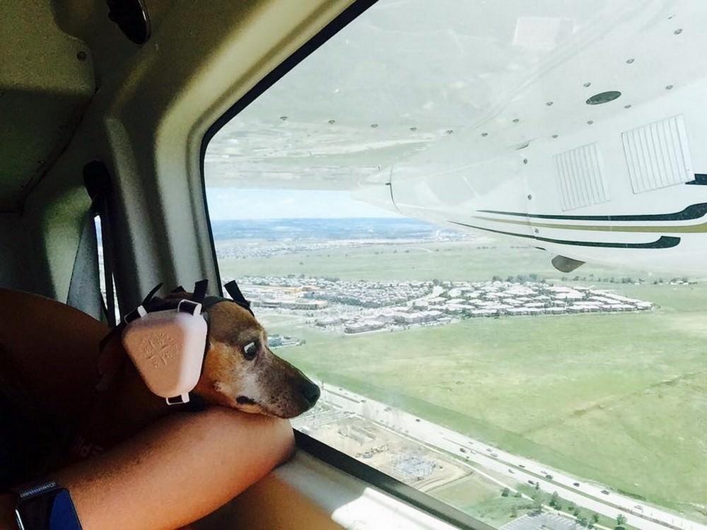 Амурами купидонами, прикольные картинки полета на самолете