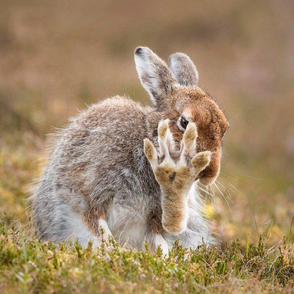 Праздник, приколы картинки зайцев