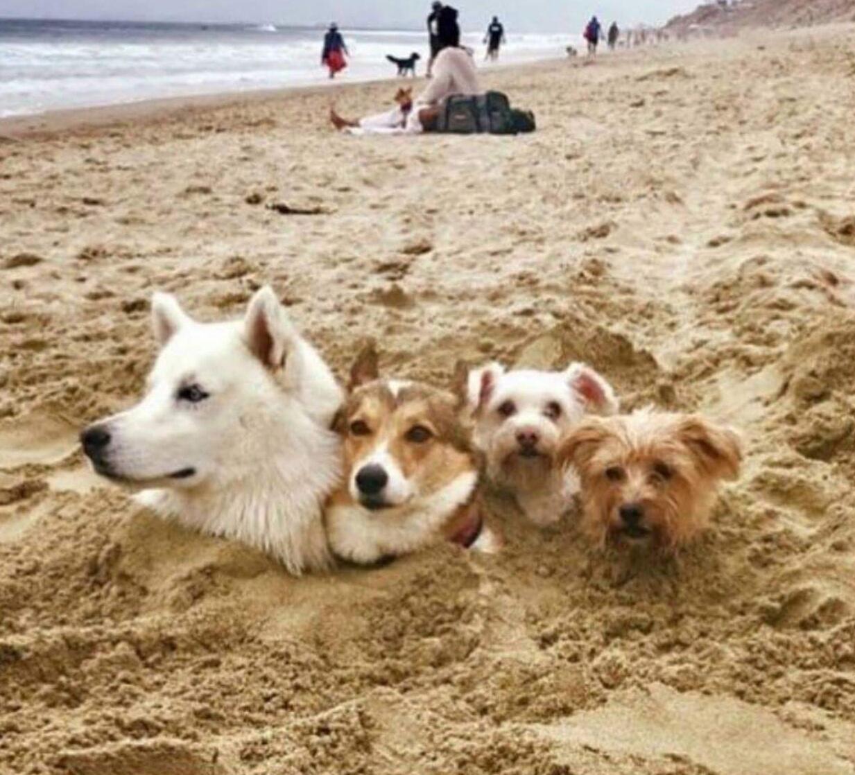 Для, смешные картинки на пляжу
