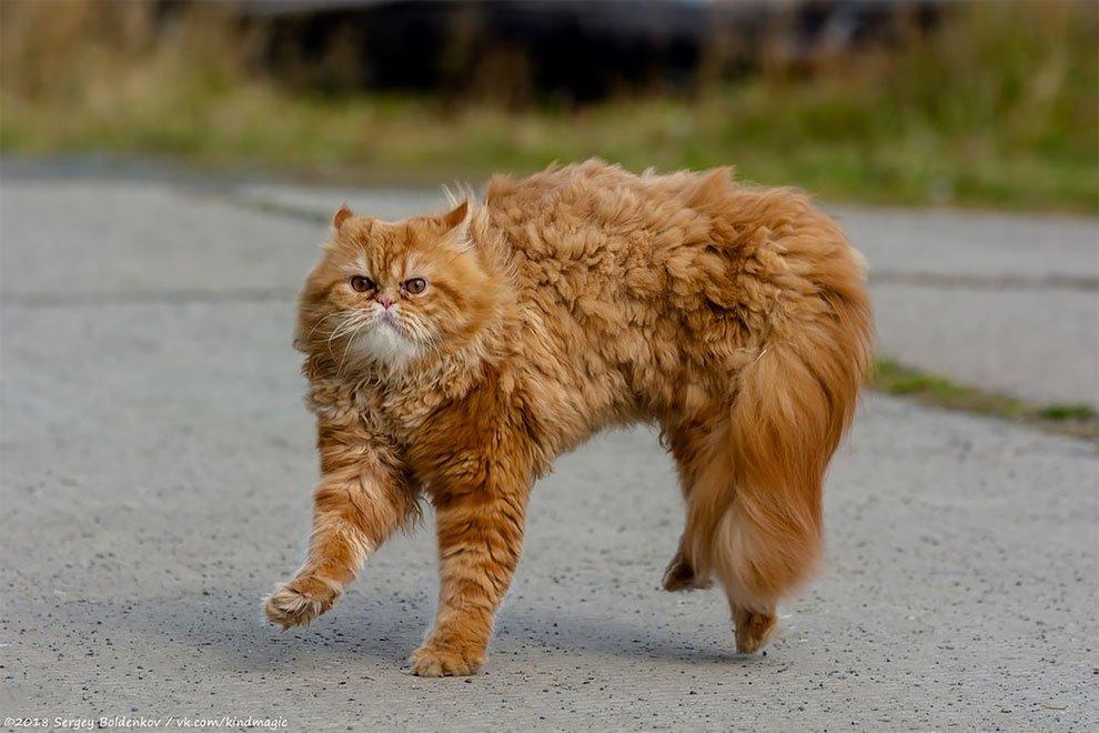 Кот барсик картинки прикольные
