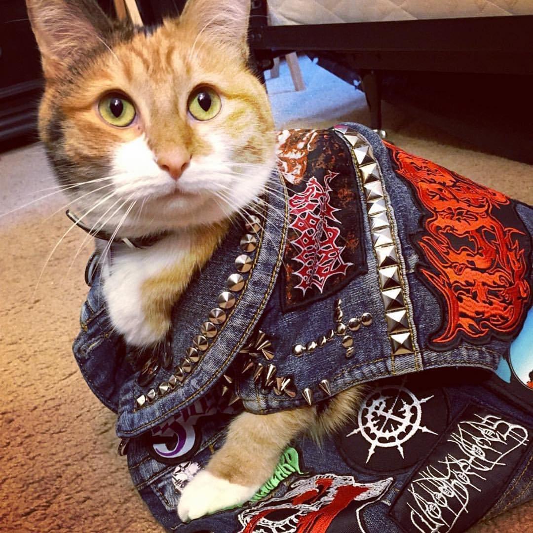 Коты металлисты картинки