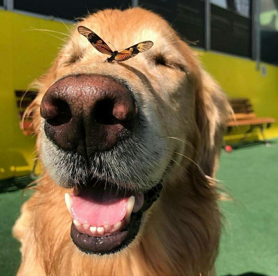 Спасибо собаками, большую смешную картинку