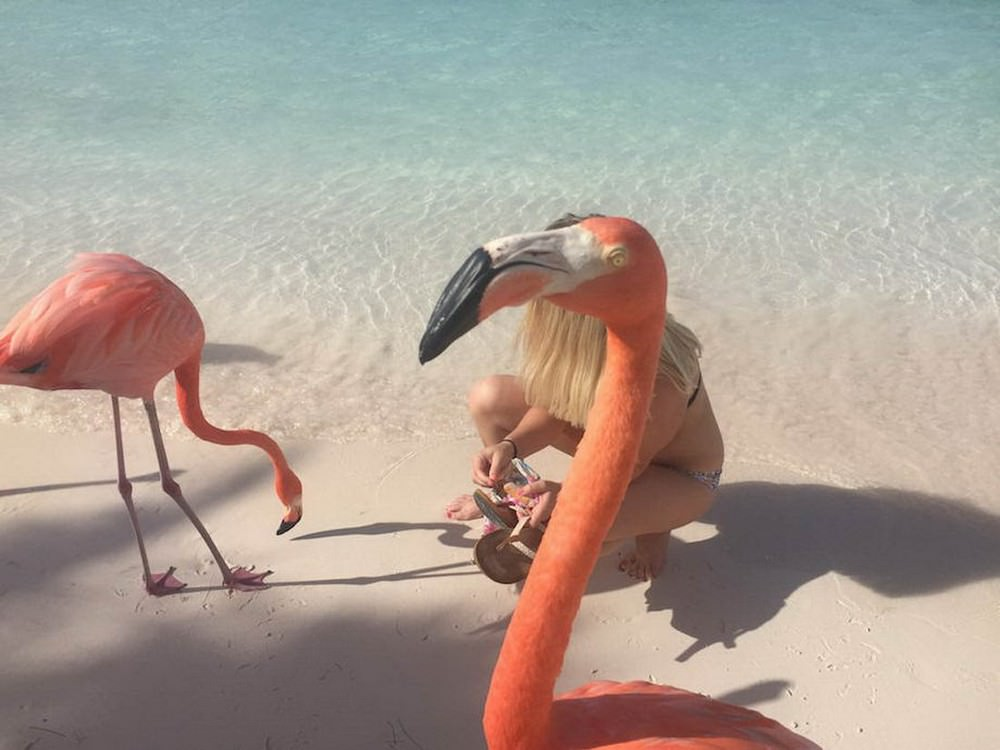 Смешной фламинго картинки