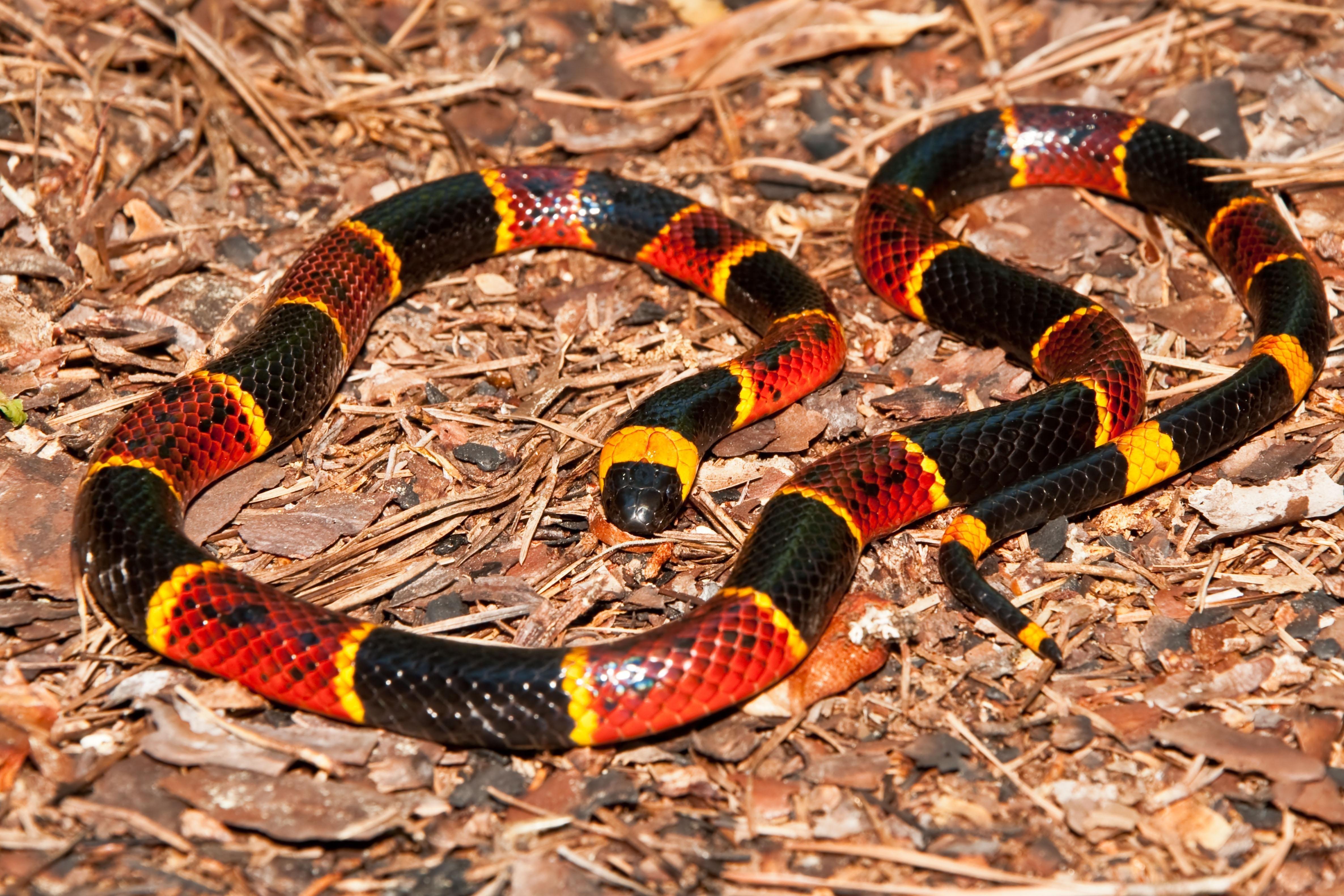 Змеи фотографии самые ядовитые