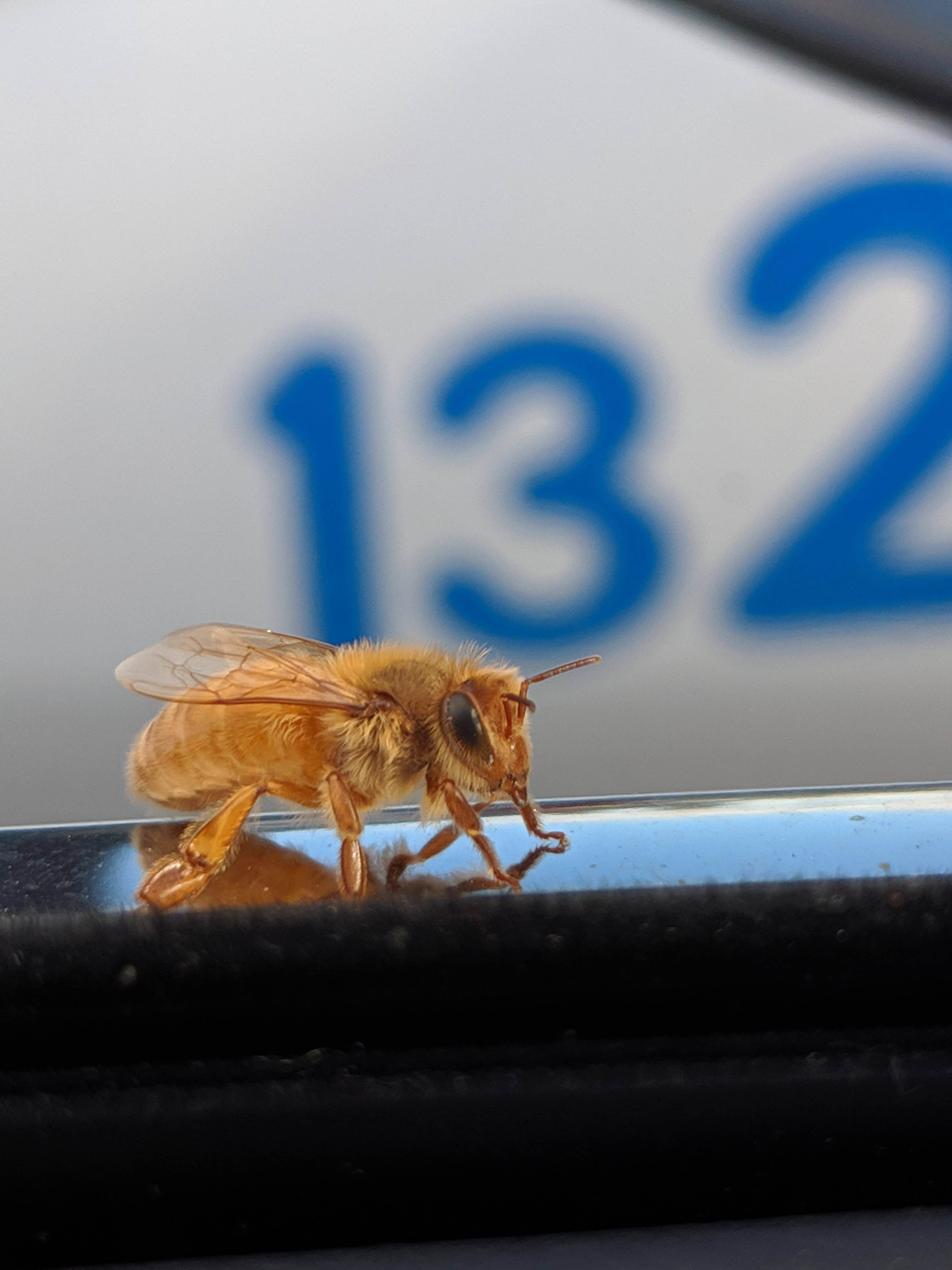 Картинки приколы пчелы