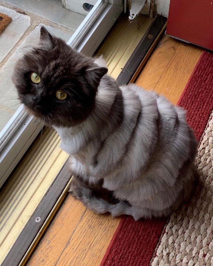Картинки стриженного кота
