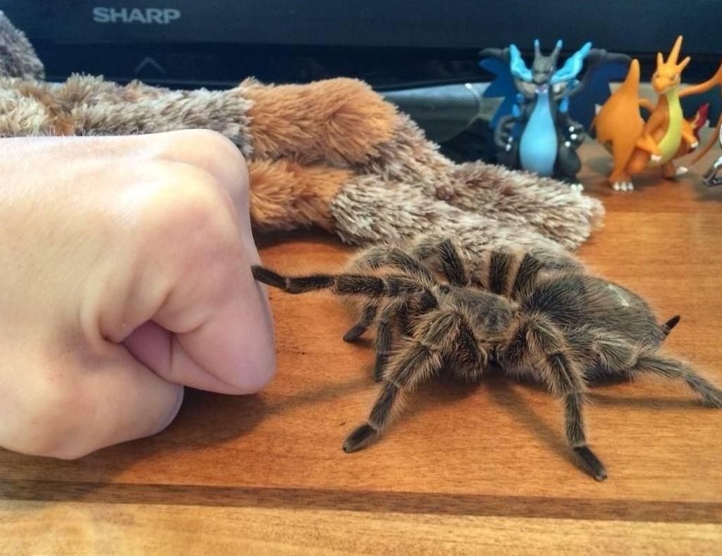 Смешные картинки с пауком