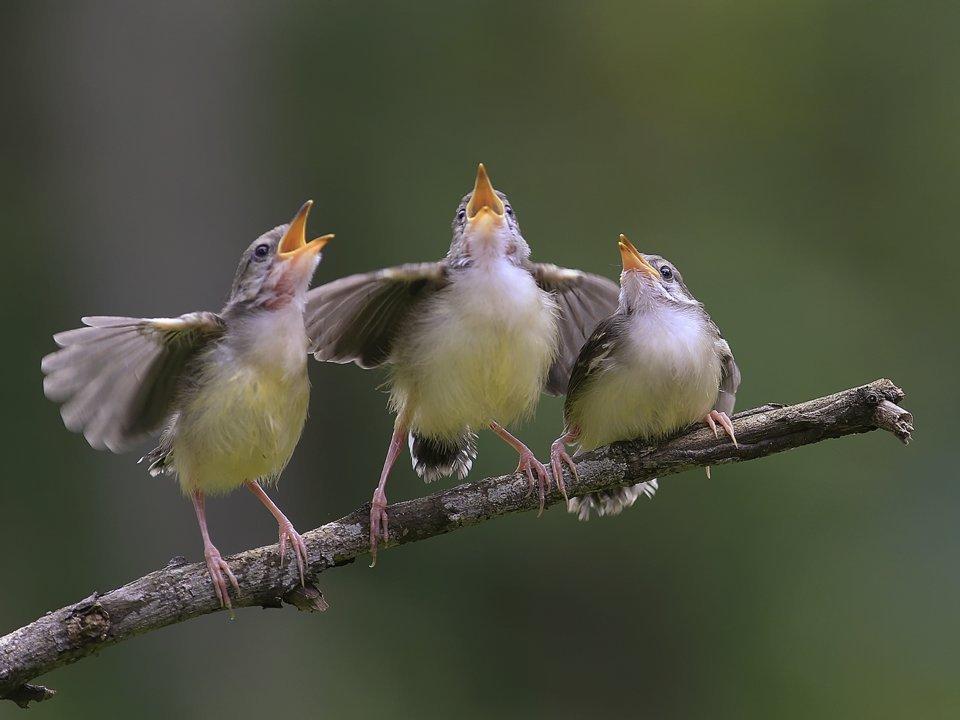 картинка птичьи трели ее