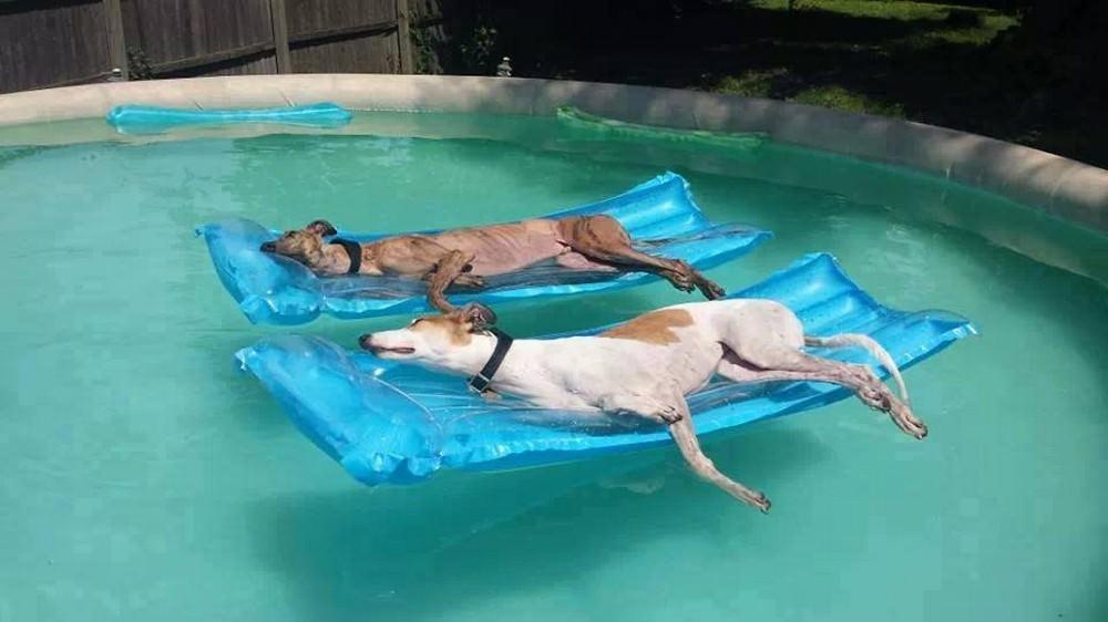 погоды картинки про бассейн смешные самом деле псков