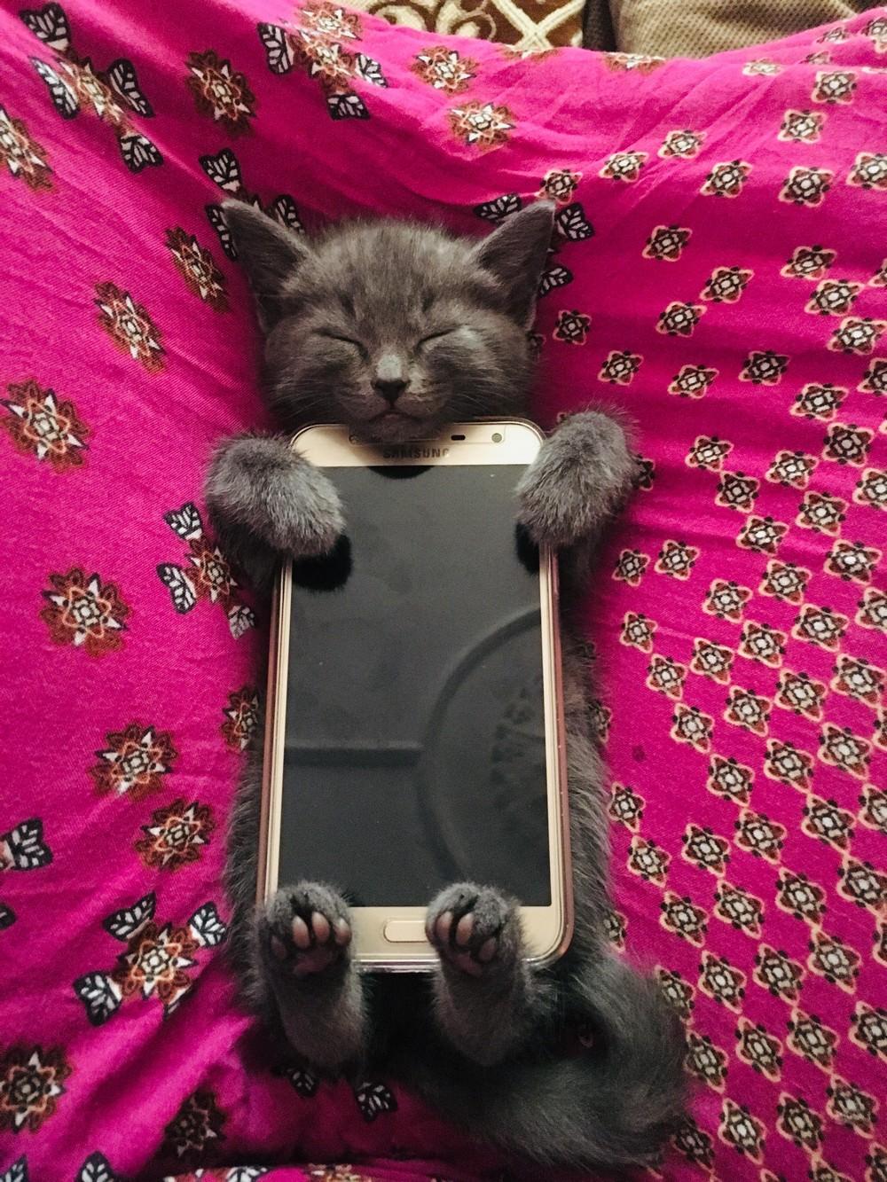 Смешные картинки за телефоном