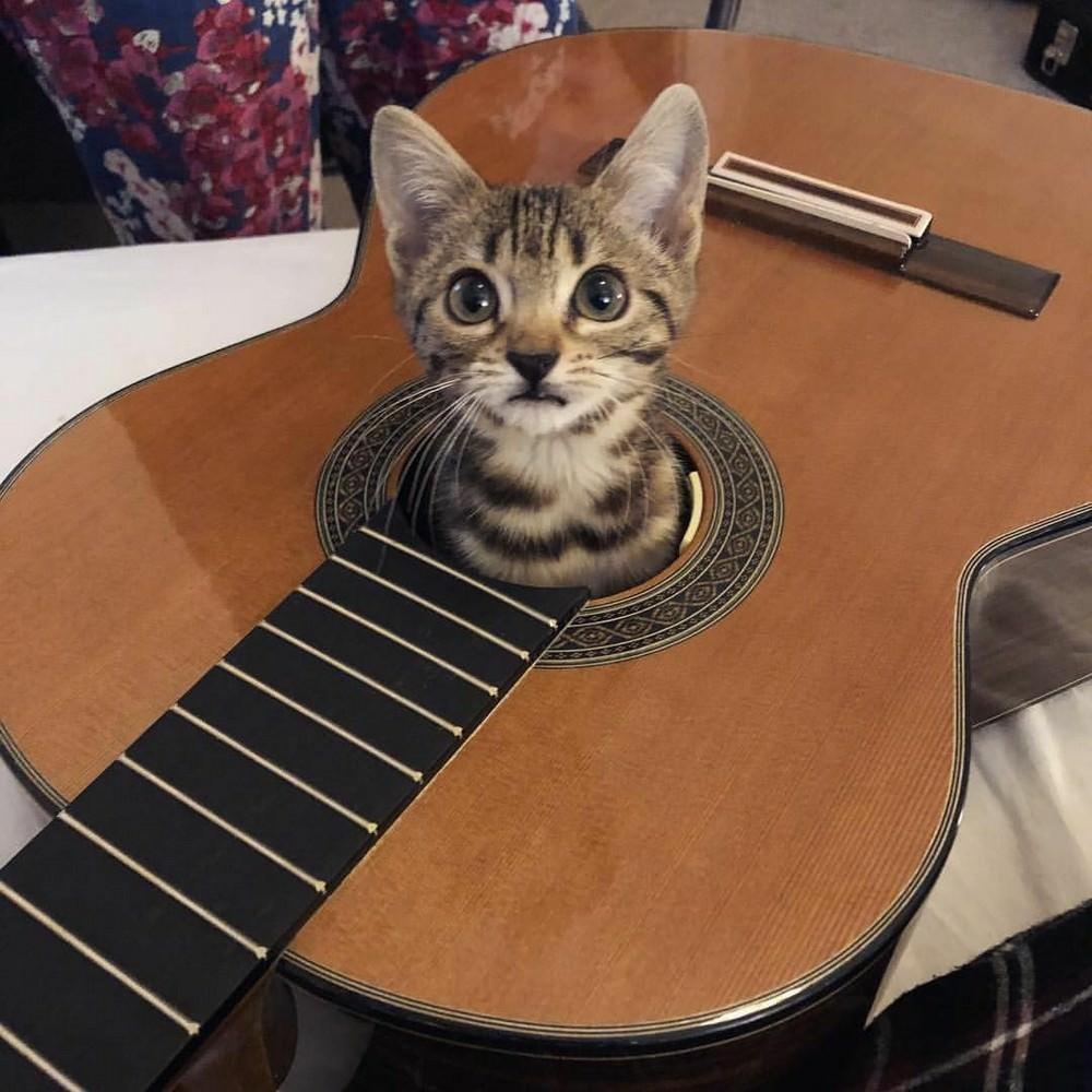 Картинка гитара смешная, жилетка