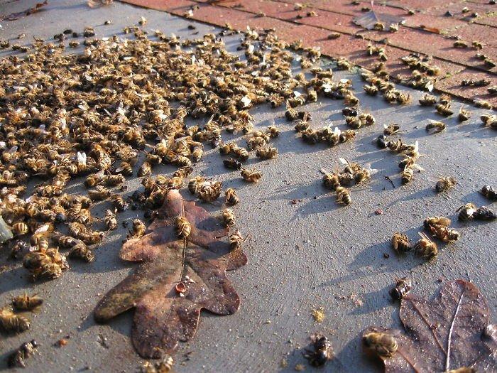 500 миллионов пчел погибли в Бразилии в течение трех месяцев