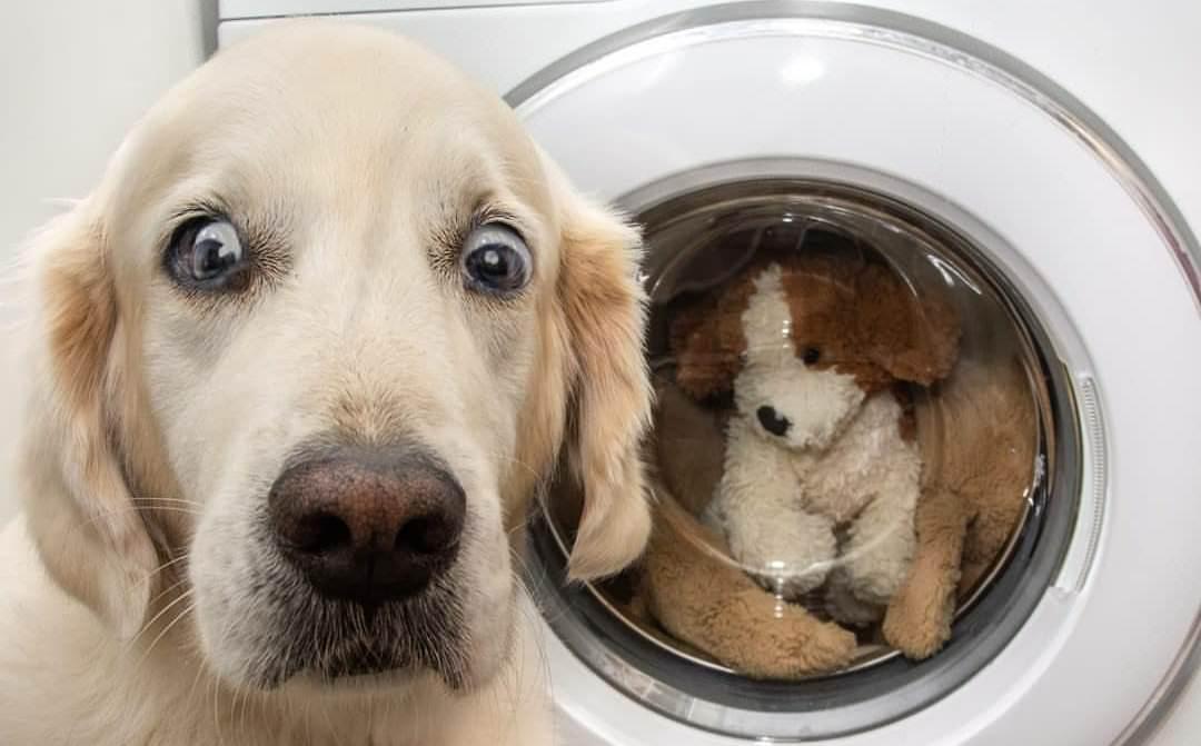Смешные картинки фото с животными до слез