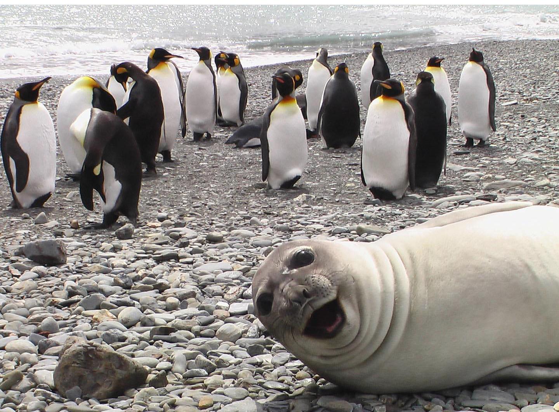 Картинки котики морские пингвины