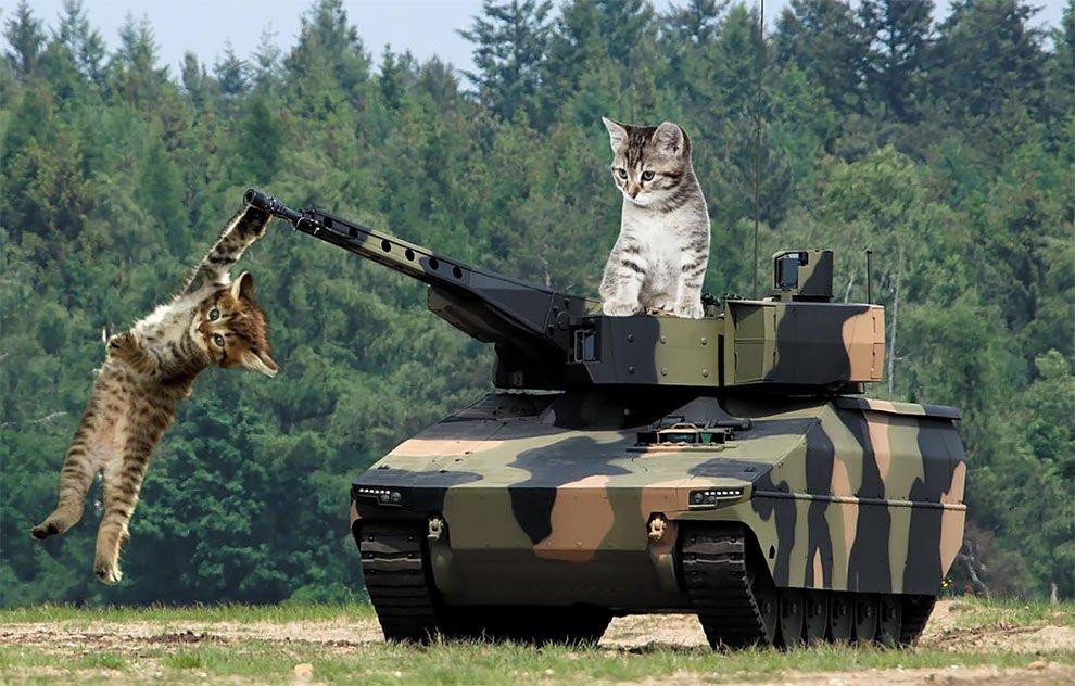 картинки боевых кошек свадьбу
