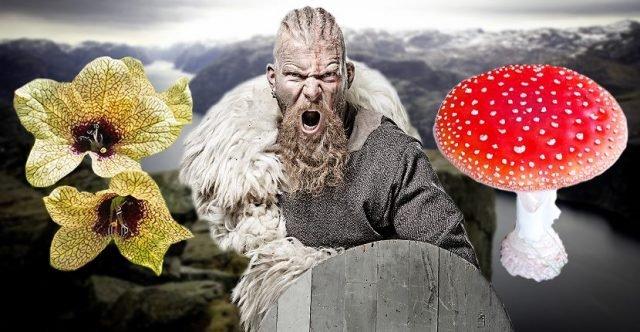 Откуда у викингов была безумная сила