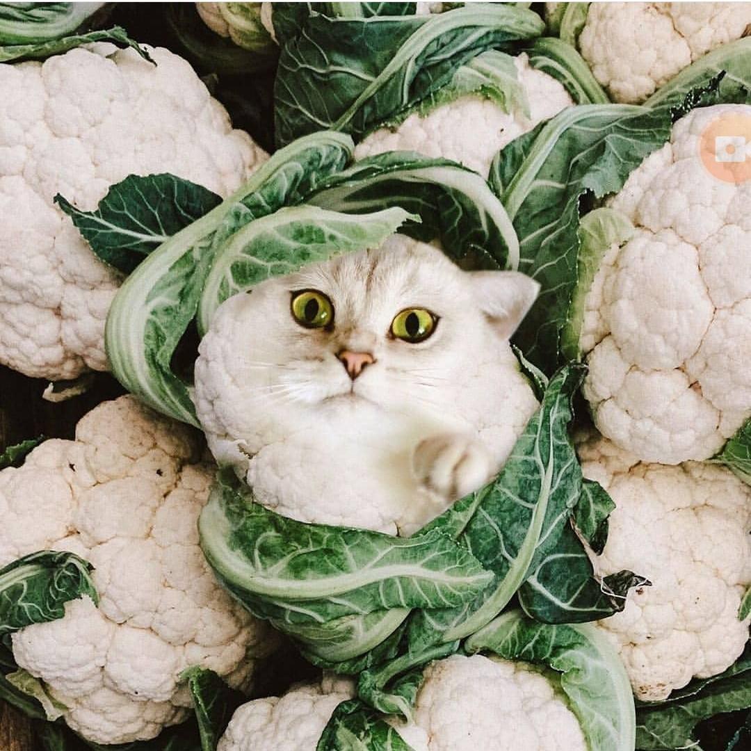 Прикольные картинки капусты