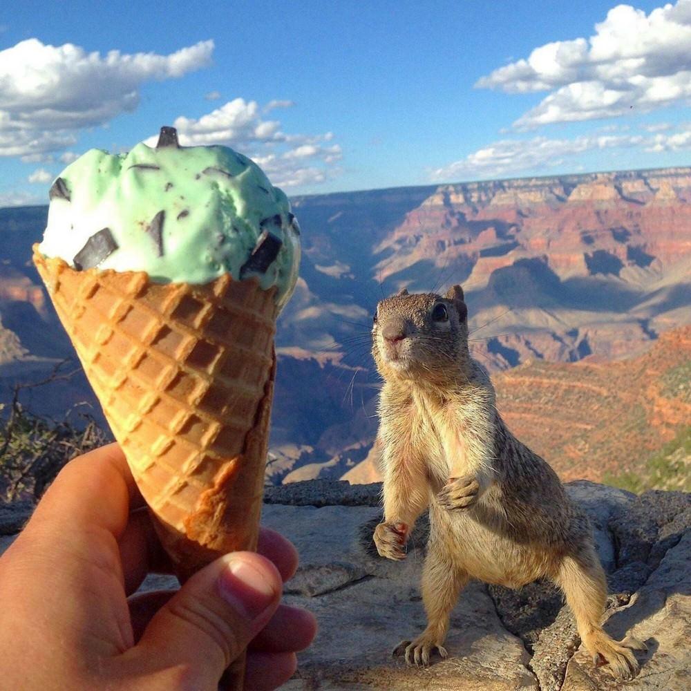 Фото приколы мороженое