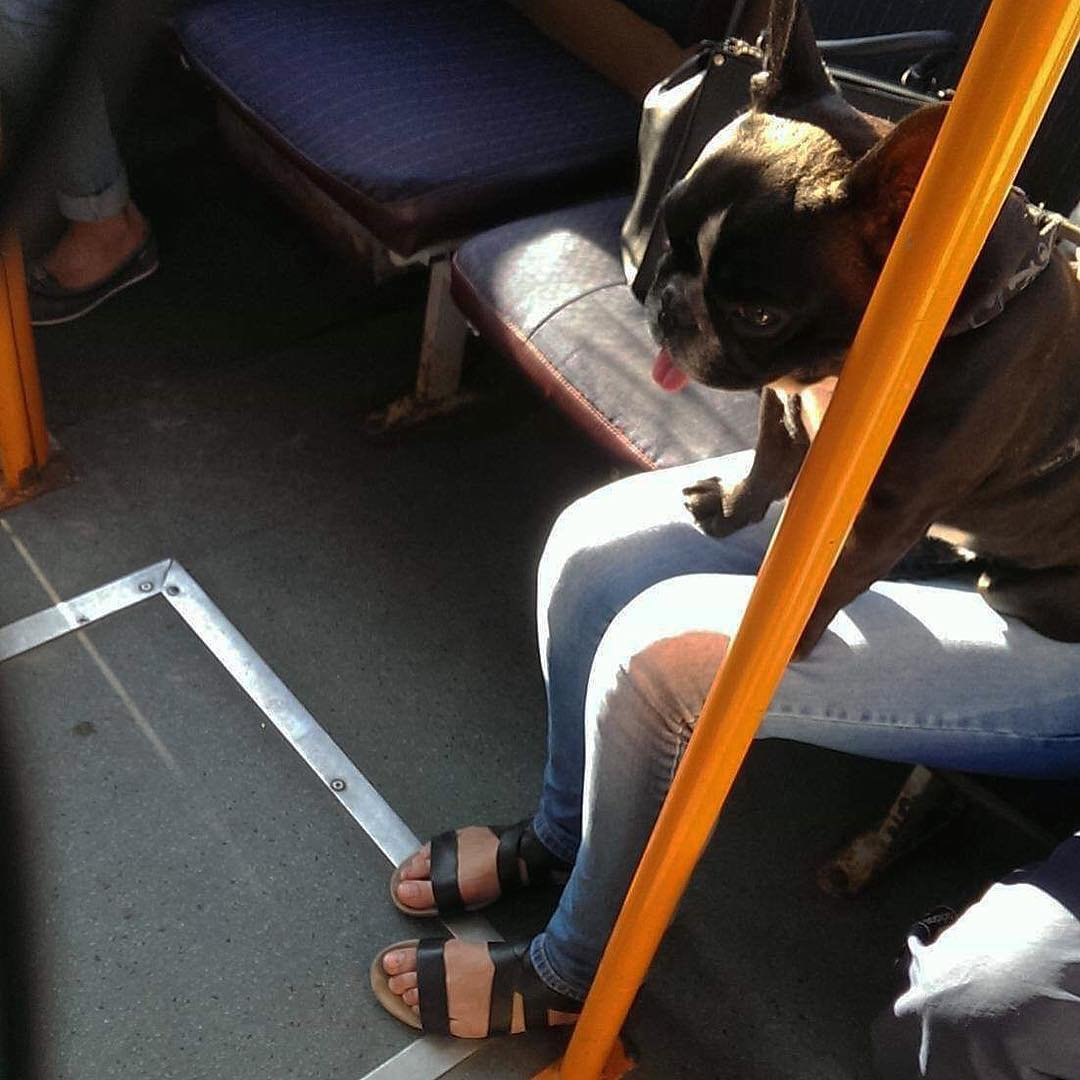 смешные картинки пассажиров