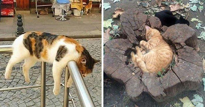 Забавные фотографии кошек, спящих в самых неожиданных местах