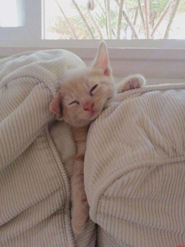 сможем прикольные картинки со спящими быть