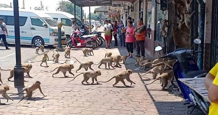 Голодные обезьяны на улицах Таиланда