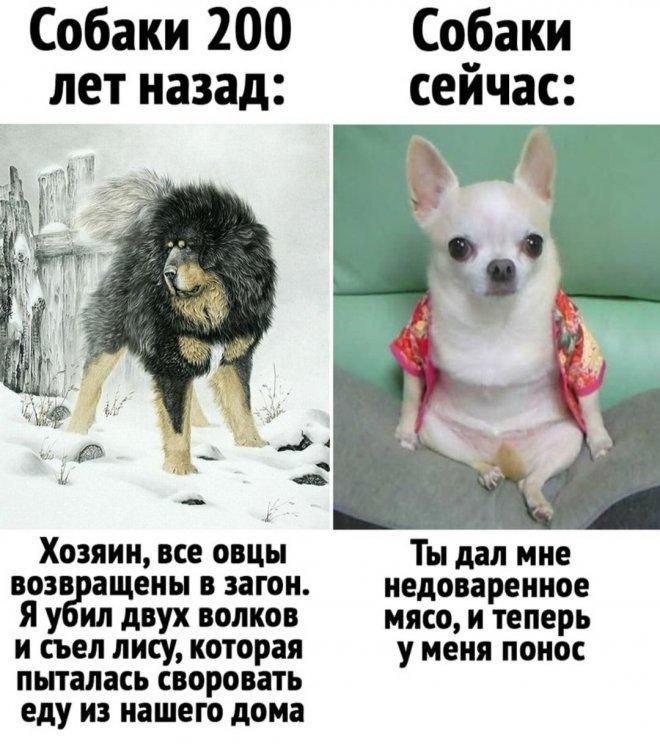 1627541760_pressa_tv_mem-24.jpeg